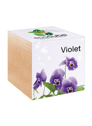 Feel Green Ecocube Violet Plants in Wooden Cube, Brown