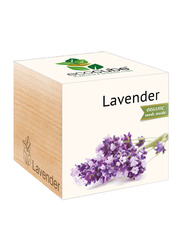 Feel Green Ecocube Lavender Plants in Wooden Cube, Brown