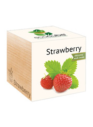 Feel Green Ecocube Strawberry Plants in Wooden Cube, Brown