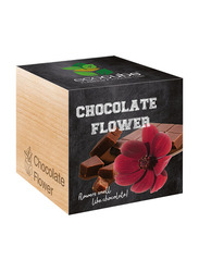 Feel Green Ecocube Chocolate Flower Plants in Wooden Cube, Brown