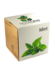 Feel Green Ecocube Mint Plants in Wooden Cube, Brown