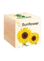 Feel Green Ecocube Sun Flower Plants in Wooden Cube, Brown