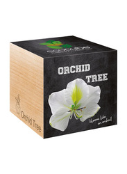Feel Green Ecocube Orchid Tree Plants in Wooden Cube, Brown