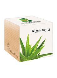 Feel Green Ecocube Aloe Vera Plants in Wooden Cube, Brown