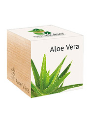 Feel Green Ecocube Aloe Vera Plants in Wooden Cube, Brown