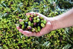 Bravo Chef Green Olives Cream Pate, 550g