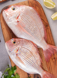 Long Finned Sea Bream Fresh Fish UAE, 1 KG Approx 2 Pieces (Whole, Without Cleaning)