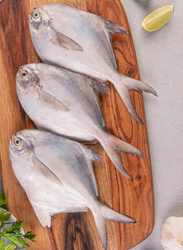 Silver Pomfret Fresh Fish Pakistan, 1 KG Approx 5 Pieces (Whole)