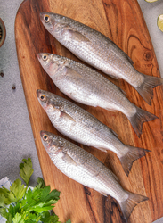 Grey Mullet Fresh Fish Small UAE, 1 KG Approx 8 Pieces (Whole)