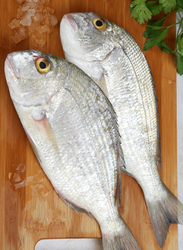 Goldlined Seabream Fresh Fish UAE, 1 KG Approx 3 Pieces (Whole, Cleaned & Gutted)