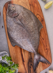 Black Pomfret Fresh Fish Oman, 600/700Grams 1 Piece (Whole)